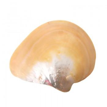 Conchiglia mop da mm 154