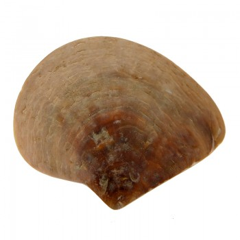 Conchiglia mop grezza da mm 140