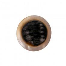 Tondo in conchiglia black lip naturale/grezza da cm 2.5