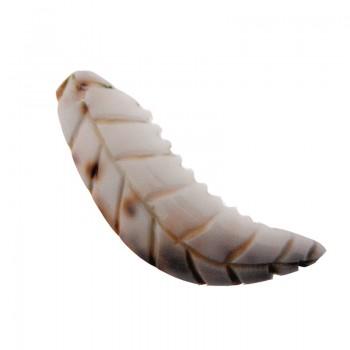 Particolare in conchiglia piccolo con foro cm 5 circa