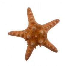 Stella marina da cm 8 a cm 10